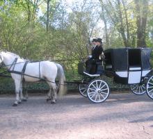 Exclusieve paardkoets in Warschau