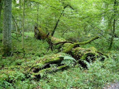 Ralf Lotys in Bialowieski National Park