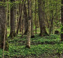 Bialowieza Nationaal Park